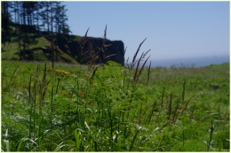 A beautiful meadow by the beach.